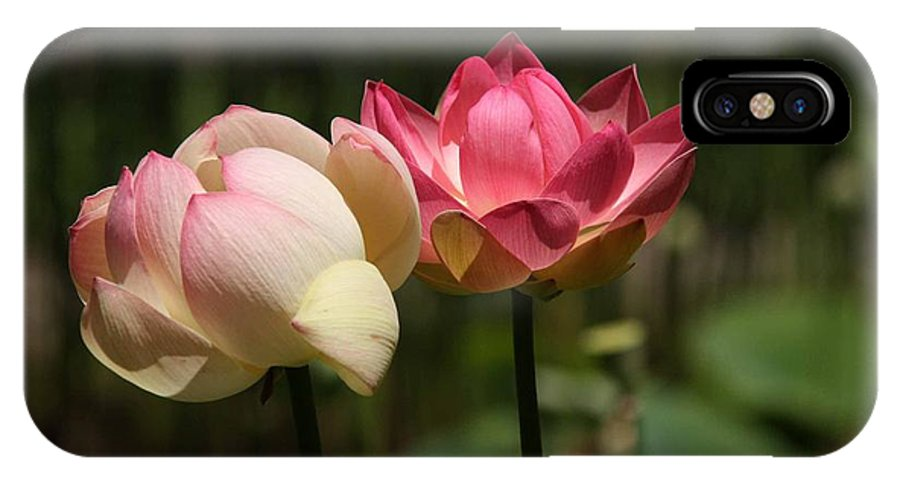 Flowers IPhone X Case featuring the photograph Lotus by Penny Smith