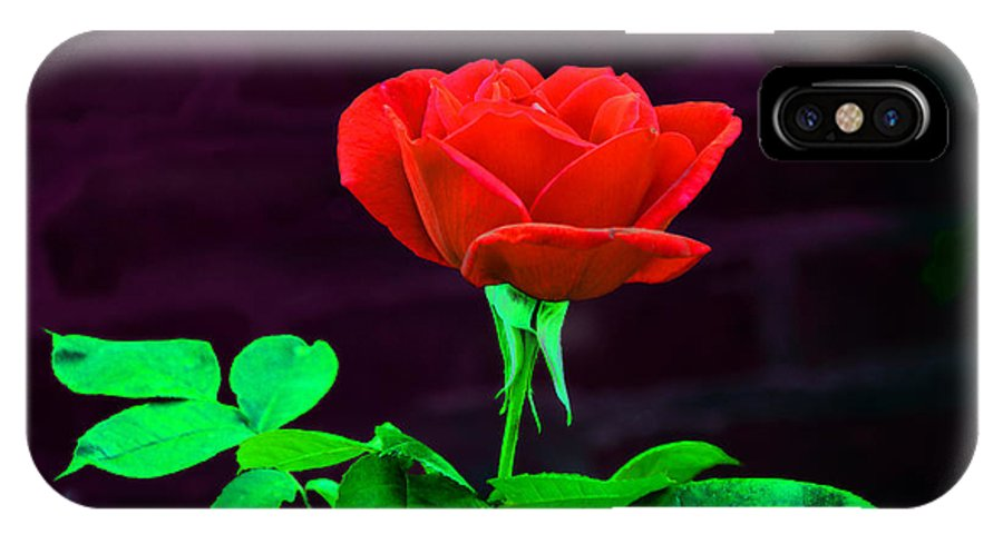 Rose IPhone X Case featuring the photograph Love Is A Rose by Bill Cannon