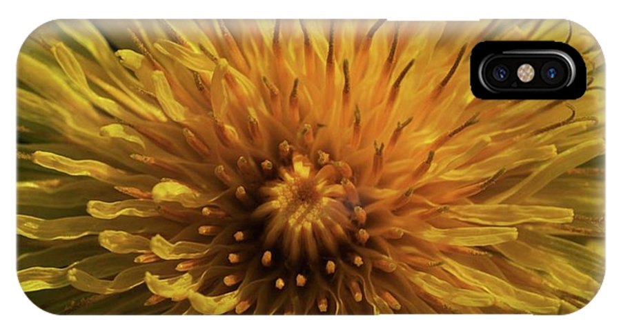 IPhone X Case featuring the photograph Love Me by Glen Baker