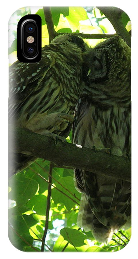Owls IPhone X Case featuring the photograph Love Owls by Lainie Wrightson