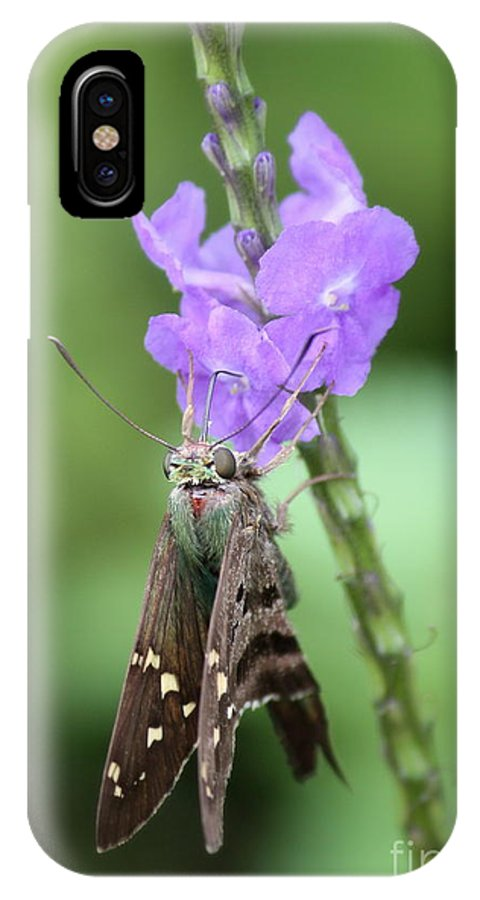 Nature IPhone X Case featuring the photograph Lovely Moth On Dainty Flower by Carol Groenen
