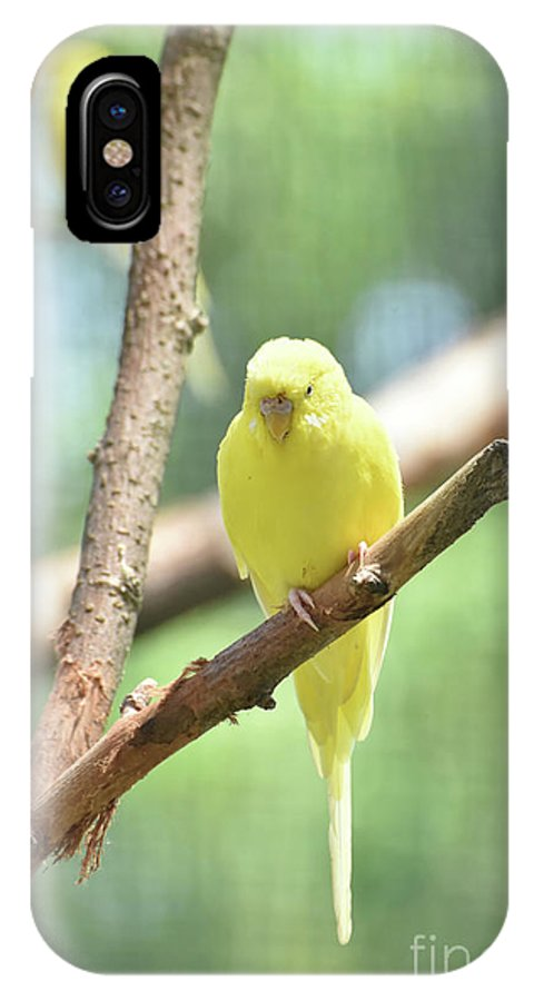 Budgie IPhone X Case featuring the photograph Lovely Yellow Budgie Parakeet In The Wild by DejaVu Designs