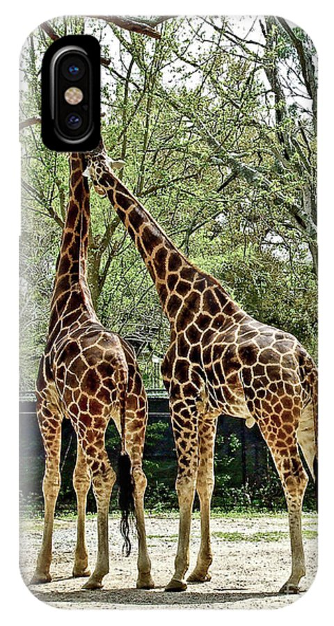 Giraffe IPhone X Case featuring the photograph Loving by Frances Ann Hattier