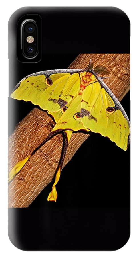 Luna Moth IPhone X Case featuring the photograph Luna Moth by Judy Vincent