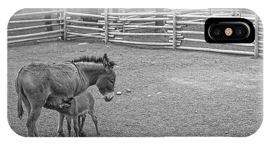 Donkey IPhone X / XS Case featuring the photograph Lunch Break by Jim Vance