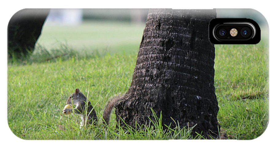 Squirrel IPhone X Case featuring the photograph Lunch Time? by Arlin Harder