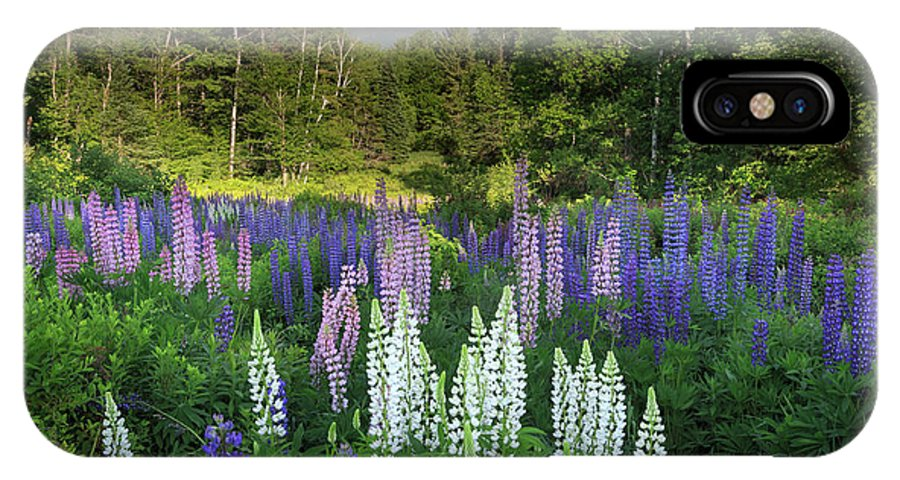 Sugar Hill IPhone X Case featuring the photograph Lupine In The Valley by Bill Wakeley