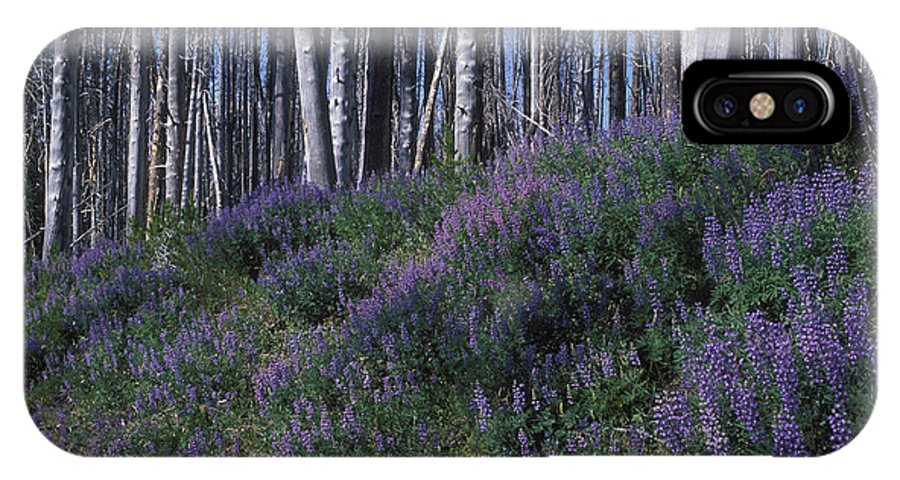 Yellowstone National Park IPhone X Case featuring the photograph Lupine On Mt. Washburn - Yellowstone by Sandra Bronstein