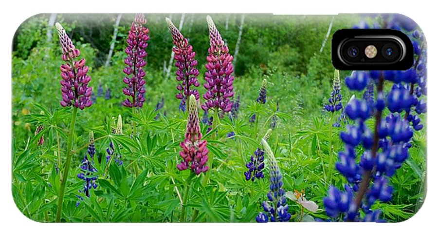 Canada IPhone X Case featuring the photograph Lupins 2016 4 by Rodger Wilkie