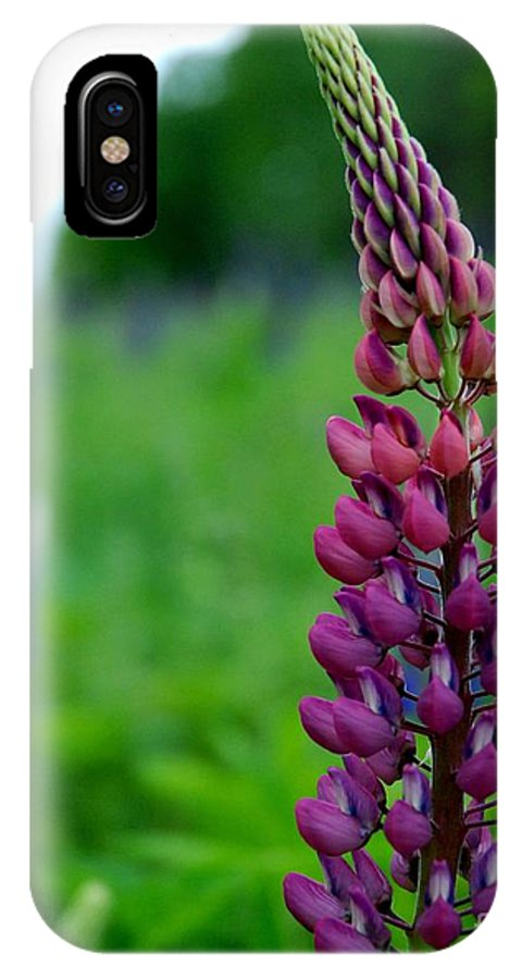 Canada IPhone X Case featuring the photograph Lupins 2016 5 by Rodger Wilkie