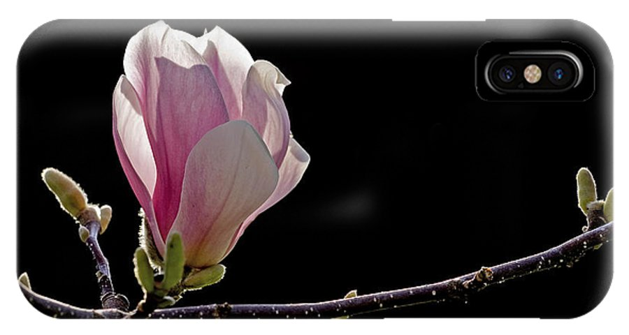 Magnolia IPhone X / XS Case featuring the photograph M A G N O L I A by Thomas Herzog