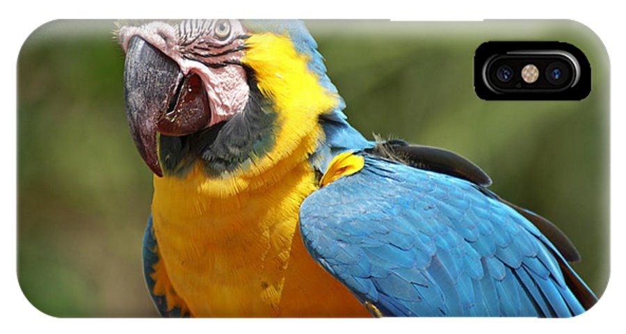 Parrot IPhone Case featuring the photograph Macaw by Heather Coen
