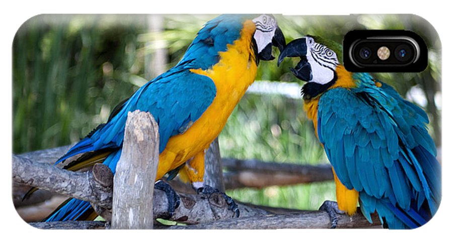 Macaw IPhone X Case featuring the photograph Macaws by Ken Howard