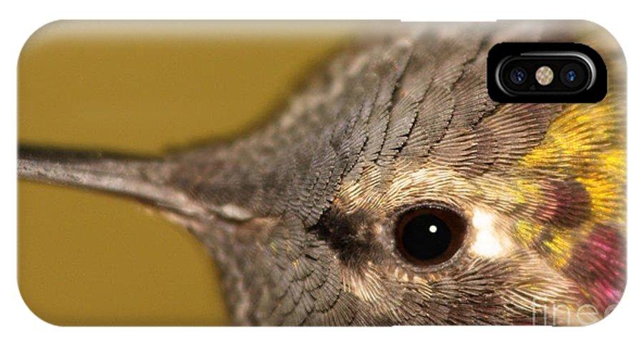 Arizona IPhone X Case featuring the photograph Macro Portrait Of Costa's Hummingbird by Max Allen