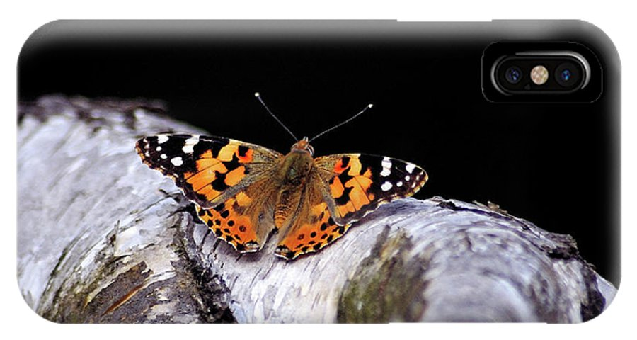 Butterfly IPhone X Case featuring the photograph Madame Butterfly by Ilaria Andreucci