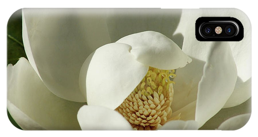 Flower IPhone X Case featuring the photograph Magnolia by Cathi Abbiss Crane