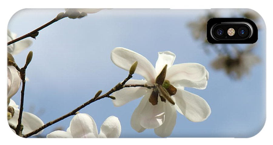 Magnolia IPhone X Case featuring the photograph Magnolia Flowers White Magnolia Tree Spring Flowers Artwork Blue Sky by Baslee Troutman