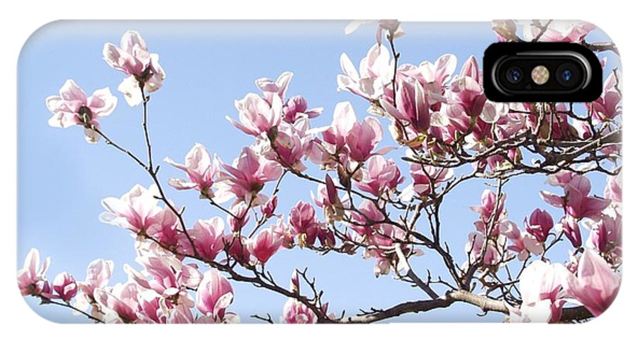 Magnolia IPhone X Case featuring the photograph Magnolia Tree Against Blue Sky by Carol Sweetwood