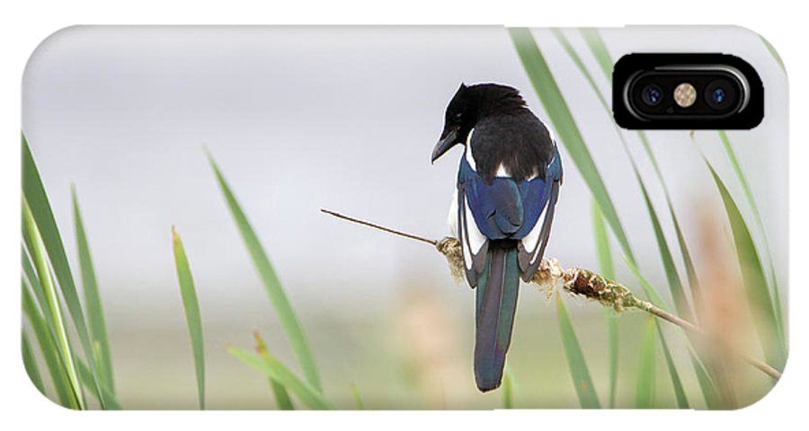 Magpie IPhone X Case featuring the photograph Magpie by Peter Walkden