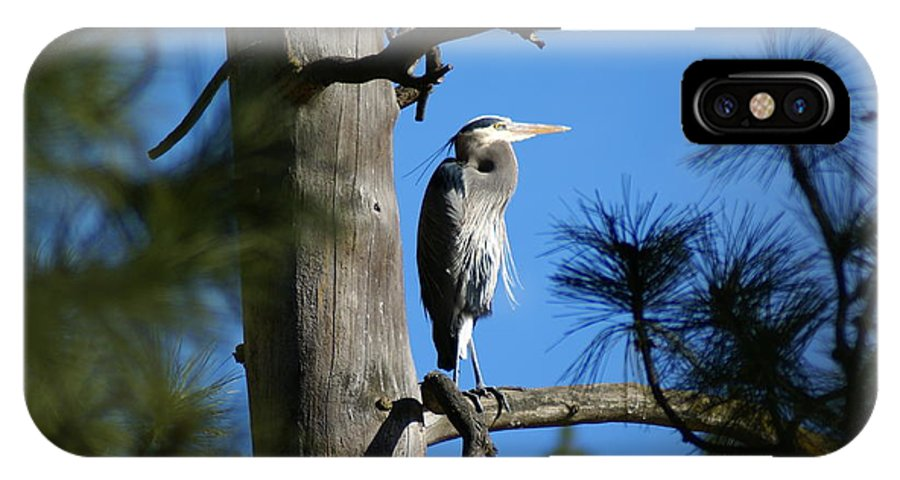 Birds IPhone X Case featuring the photograph Majestic Great Blue Heron 1 by Ben Upham III