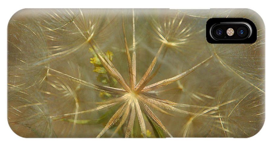 Dandelion IPhone X Case featuring the photograph Make A Wish by Donna Blackhall