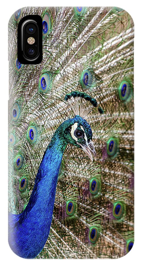Landscape IPhone X Case featuring the photograph Male Peacock Displaying by Javier Flores