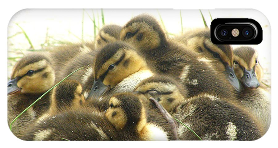Mallard IPhone X Case featuring the photograph Mallard Ducklings by Angie Rea