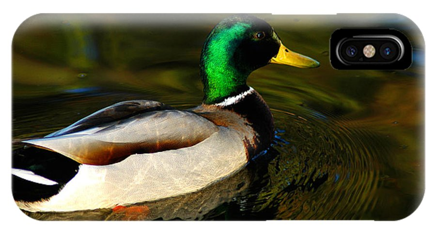 Clay IPhone Case featuring the photograph Mallard Green by Clayton Bruster