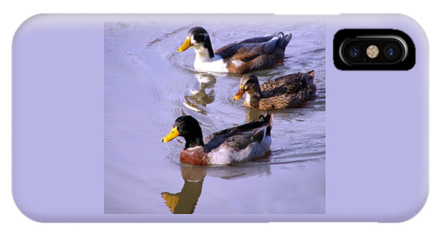 Duck IPhone Case featuring the photograph Mallards by Kenna Westerman