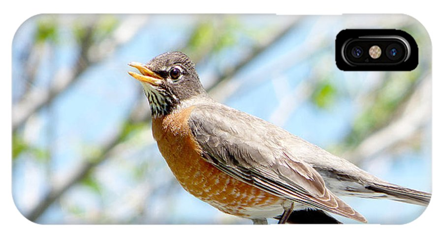Ron Glaser IPhone X / XS Case featuring the photograph Mama Robin 1 by Ron Glaser