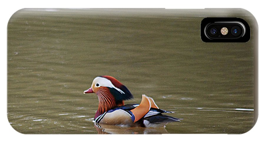 Mandarin IPhone X Case featuring the photograph Mandarin Duck 20130507_46 by Tina Hopkins