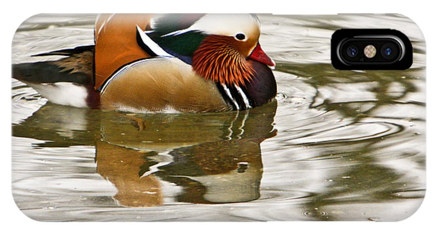 Mandrin Duck Swimming IPhone X Case featuring the photograph Mandrin Duck Going For A Swim by Douglas Barnett