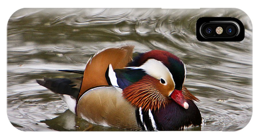 Mandrin Duck Swimming IPhone X Case featuring the photograph Mandrin Duck Posing by Douglas Barnett