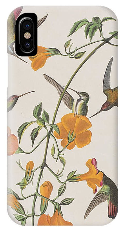 Mango Humming Bird IPhone X Case featuring the painting Mango Humming Bird by John James Audubon