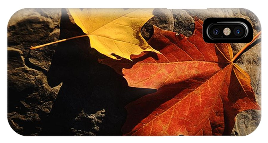 Leaf IPhone X Case featuring the photograph Maple Leaf Pair On Shadowy Rock by Anna Lisa Yoder