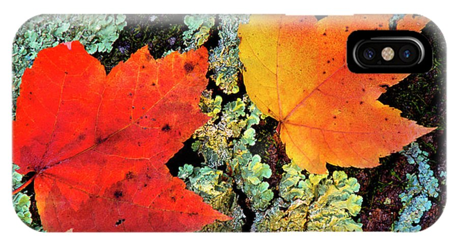 Maple Leaves IPhone X Case featuring the photograph Maple Leaves On Fallen Log by Thomas R Fletcher