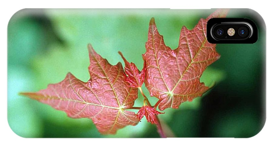 Maple Leaf IPhone X Case featuring the photograph Maple Red And Green by Laurie Paci