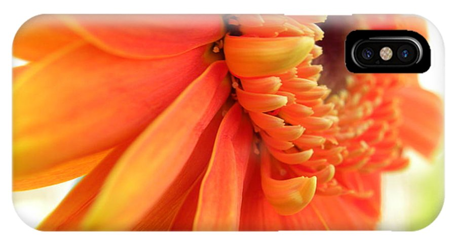 Nature IPhone X Case featuring the photograph Gerbera Daisy by Shannon Turek