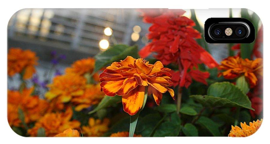 Marigold IPhone X Case featuring the photograph Marigold Sunshine by Joshua Sunday