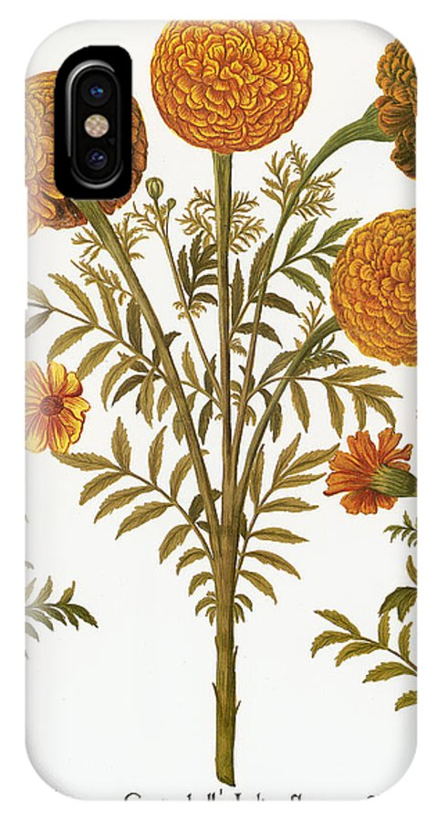 1613 IPhone X Case featuring the photograph Marigolds, 1613 by Granger