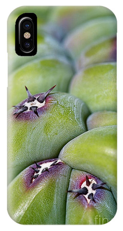 Cactus IPhone X Case featuring the photograph Mars Landing by Nancy Forehand