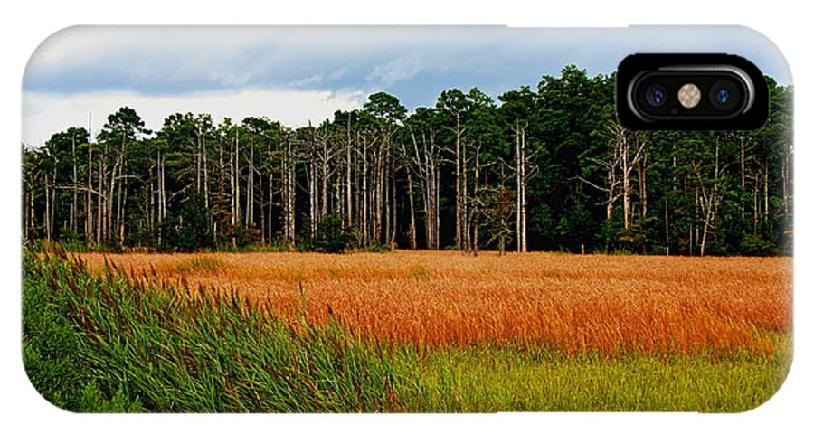 Gator Hole IPhone X Case featuring the photograph Marsh And Trees by Rand Wall