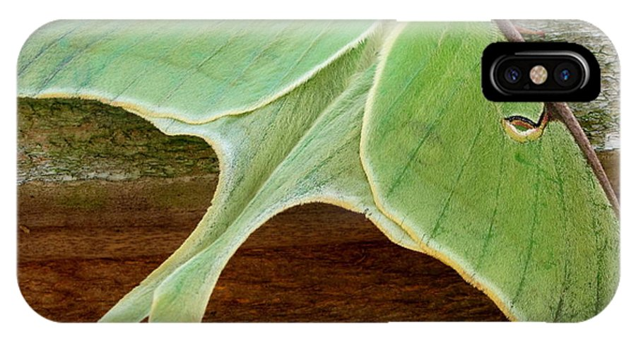 Maryland Luna Moth Images Giant Green Moth Images Luna Moth Photo Prints Entomology Forest Ecology Biodiversity Nature Big Green Moth Pictures Green Moth Photograph Prints Giant Green Moths Large Green Moths Images Nature Photography Naturalist Star Creatures Wildlife Habitat Conservation Oldgrowth Forest Protection Stop Sprawl Rare Prints Rare Moths Botany Horticulture Garden Insects Colorful Critter Prints Giant Green Moth Images Maryland Moth Identification Images Nature Prints Wild Prints IPhone X Case featuring the photograph Maryland Luna Moth by Joshua Bales