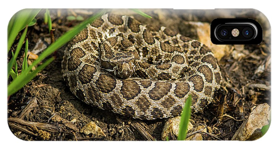 Massasauga Rattlesnake IPhone X / XS Case featuring the photograph Massasauga Rattlesnake by Jeff Phillippi