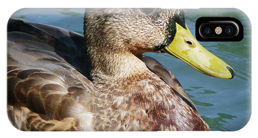 Birds IPhone X Case featuring the photograph Master Mallard by Peggy King