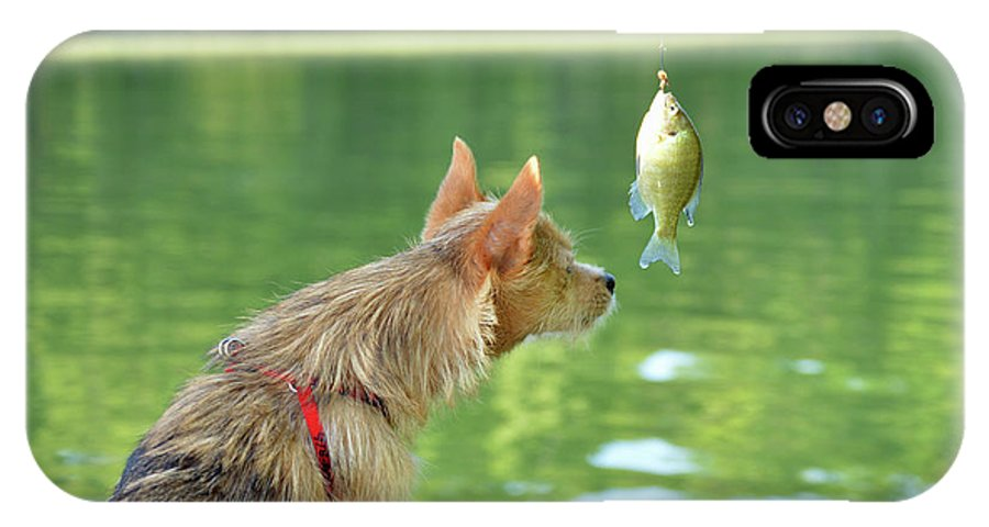Lake IPhone X / XS Case featuring the photograph Max Examines The Catch by Diane Friend