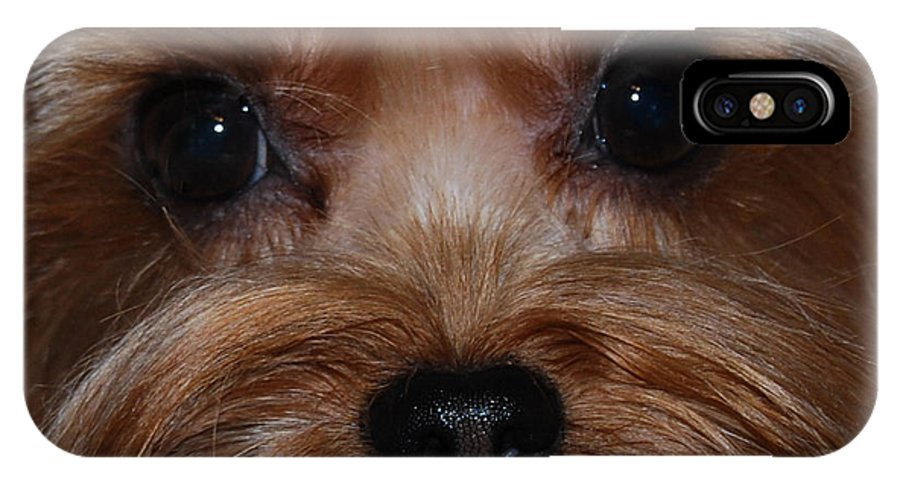 Close Up Shot Of Yorkshire Terrier IPhone X Case featuring the photograph Max by Patricia Motley