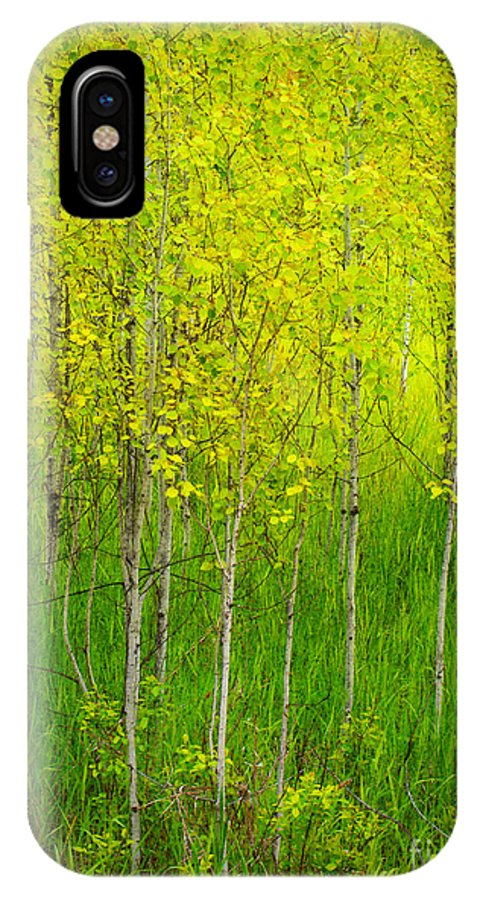 Trees IPhone X Case featuring the photograph May 25 2010 by Tara Turner