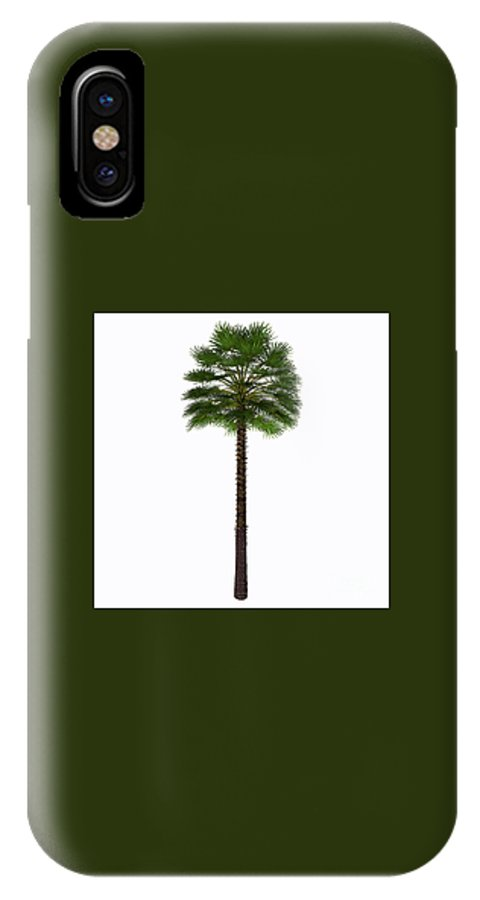 3d Illustration IPhone X / XS Case featuring the painting Mediterranean Fan Palm Tree by Corey Ford