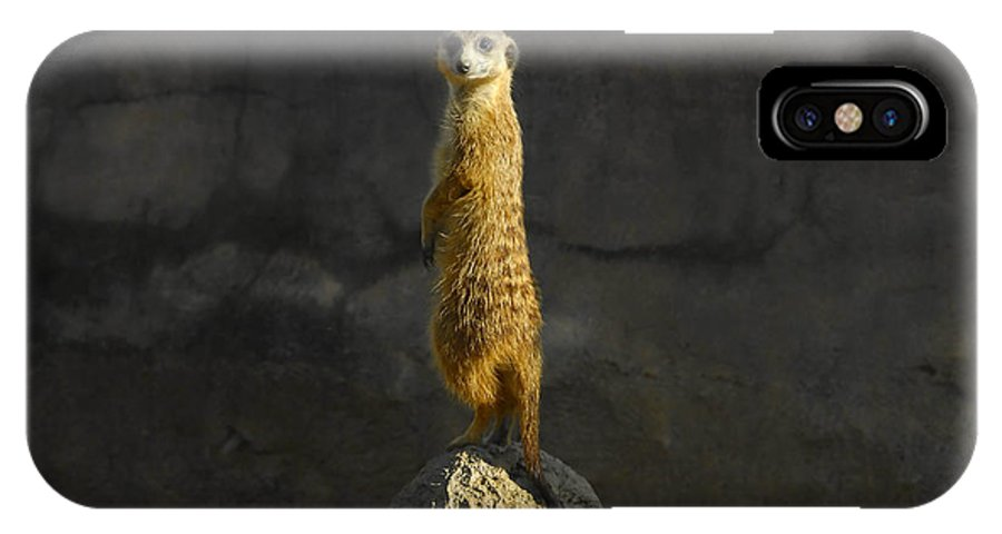 Meerkat IPhone X Case featuring the photograph Meerkat On The Watch by David Lee Thompson